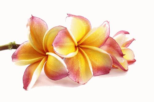 Pur Monoi De Tahiti Ao Parfum Tiare Hei Poa Ma Planete Beaute